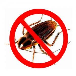 борьба с тараканами в квартире народными средствами