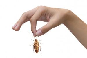 как выгнать тараканов из квартиры