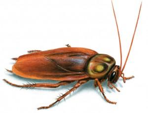 как вывести тараканов в общежитии