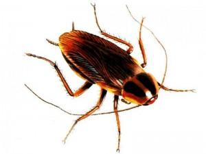 куда обращаться если тараканы в подъезде