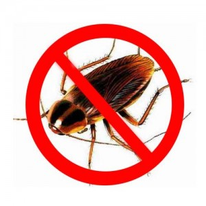 чем навсегда уничтожить тараканов в квартире
