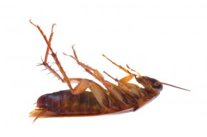как приготовить отраву для тараканов из борной кислоты