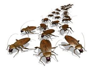 сколько стоит потравить тараканов в квартире