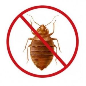 уничтожение тараканов в квартире в домашних условиях