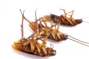 способы борьбы с тараканами в квартире